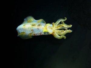 local-diving